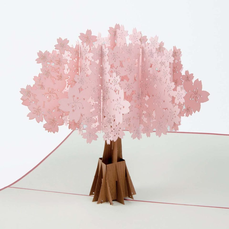 pop-up-karte_kirschbaum_rosa